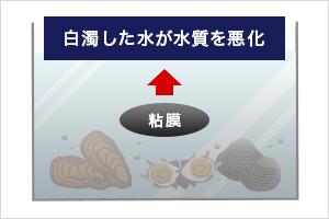 貝類は水を白濁させます。